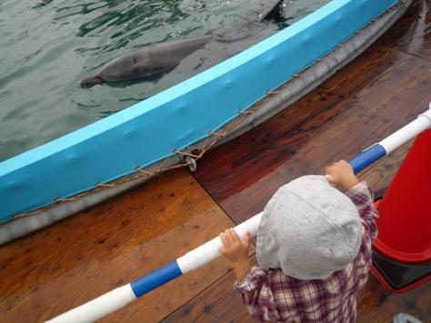 イルカとボールで遊んだでちゅ~~♪♪♪_e0123286_18225079.jpg