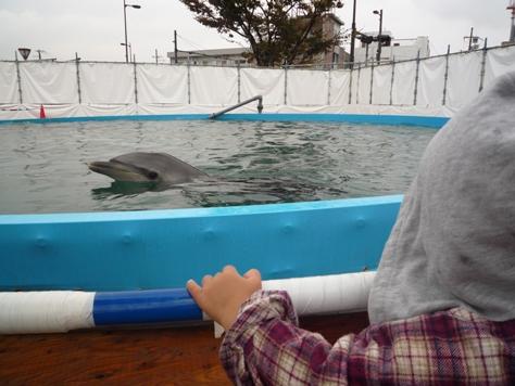 イルカとボールで遊んだでちゅ~~♪♪♪_e0123286_18232338.jpg