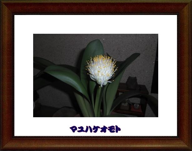 b0169292_2251068.jpg