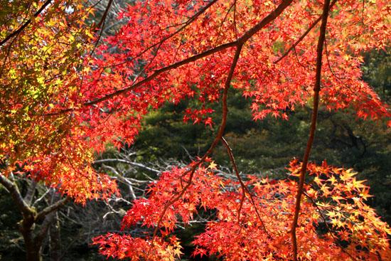 西明寺の紅葉 1_e0048413_20551625.jpg