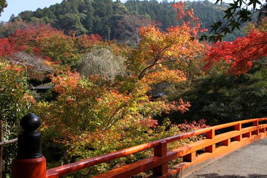 西明寺の紅葉 1_e0048413_2055378.jpg