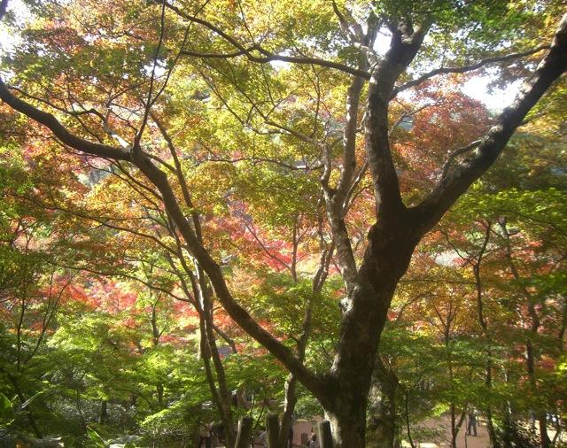 温泉_b0181015_19132676.jpg