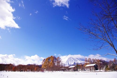 11/3 初雪のスウィートグラス_b0174425_12143298.jpg