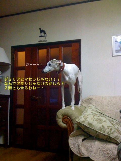 f0039538_2012033.jpg