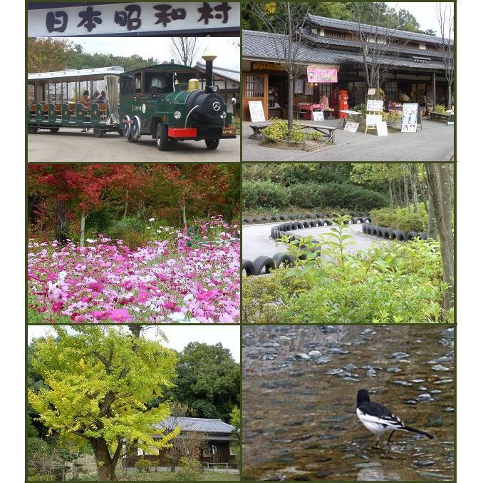 鬼岩公園~花フェスタ記念公園・・・_a0089450_20371250.jpg