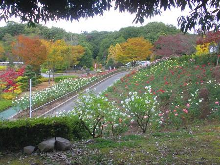 鬼岩公園~花フェスタ記念公園・・・_a0089450_22401131.jpg
