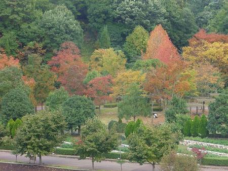 鬼岩公園~花フェスタ記念公園・・・_a0089450_22403043.jpg