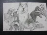 犬の日 \'09_f0053757_4375597.jpg