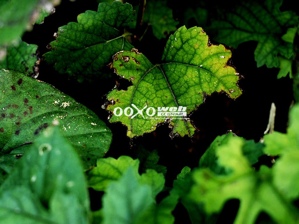 f0167057_1433972.jpg