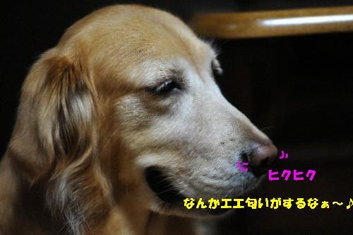 e0020166_914514.jpg