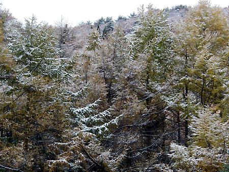 祝!初雪。_c0108174_1292490.jpg