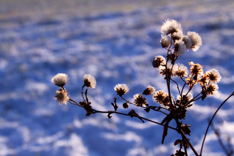 雪が降った日_f0075075_9381611.jpg