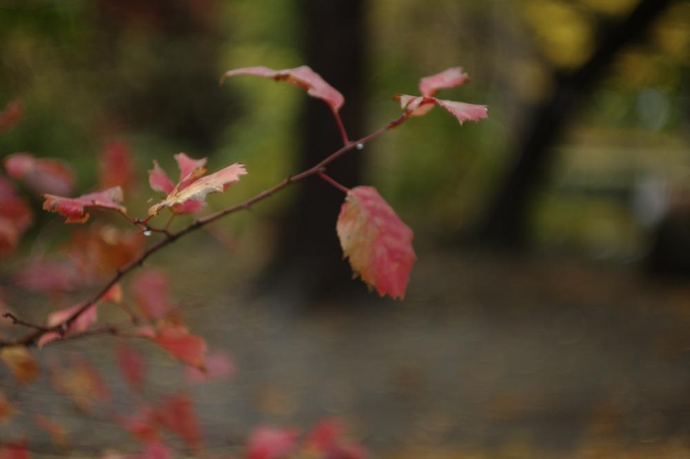 秋の葉っぱたち_f0042194_21482175.jpg