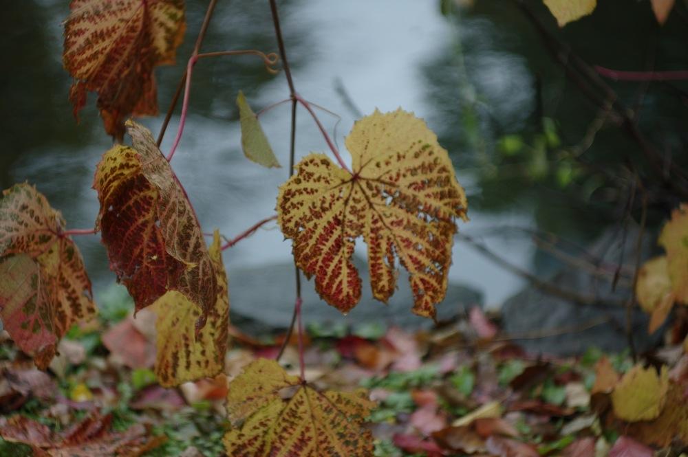 秋の葉っぱたち_f0042194_21483497.jpg