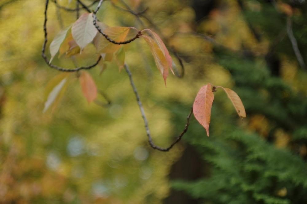 秋の葉っぱたち_f0042194_21484396.jpg