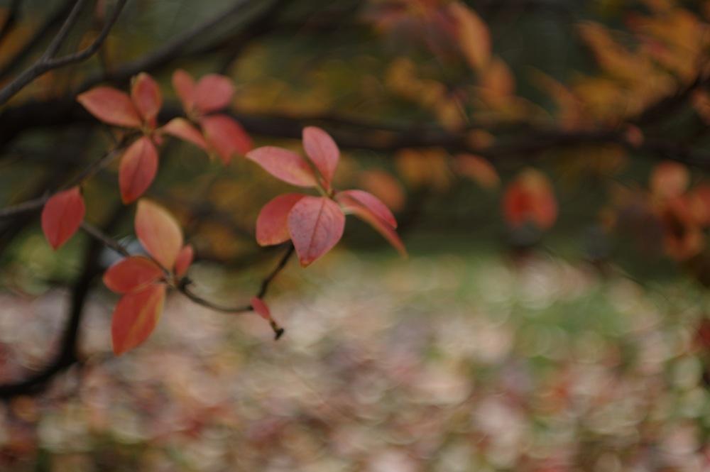 秋の葉っぱたち_f0042194_21485468.jpg