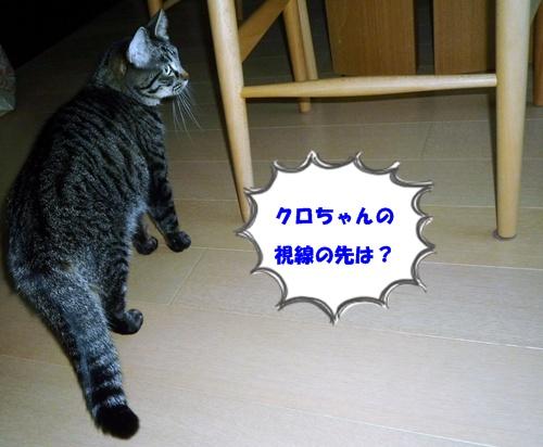 d0057701_11135471.jpg