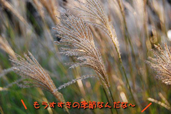 f0203612_13495411.jpg
