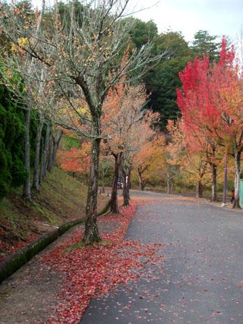 京都丹波ロードレース_e0048413_2124877.jpg