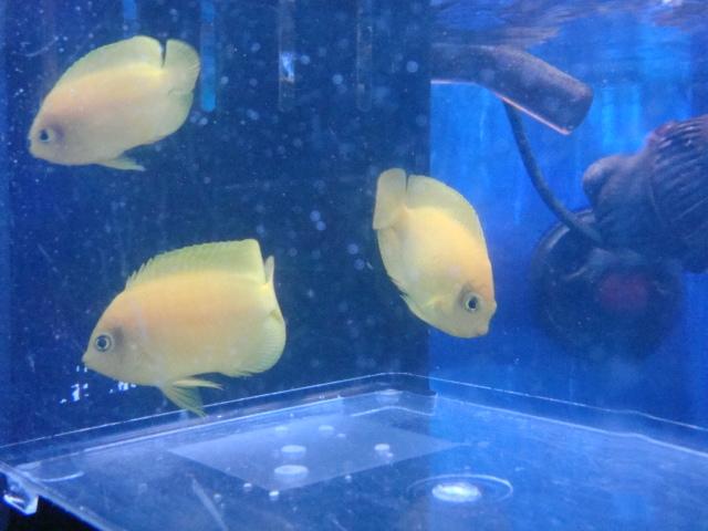 海水魚・サンゴ_f0189122_13191987.jpg