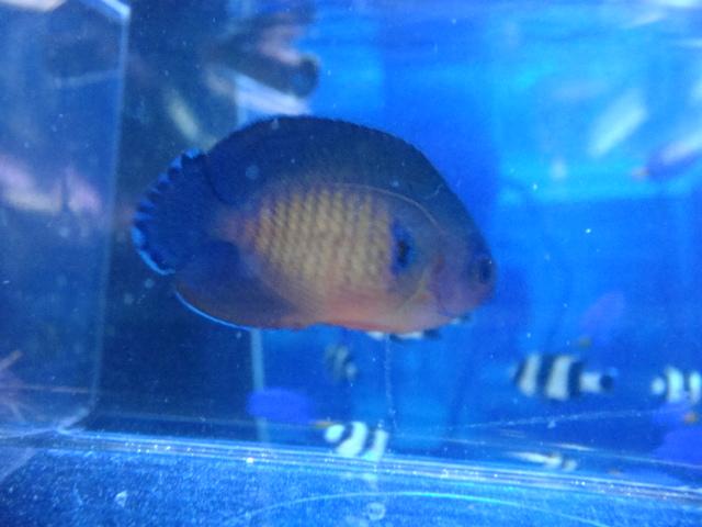 海水魚・サンゴ_f0189122_13211643.jpg