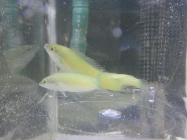 海水魚・サンゴ_f0189122_13213066.jpg