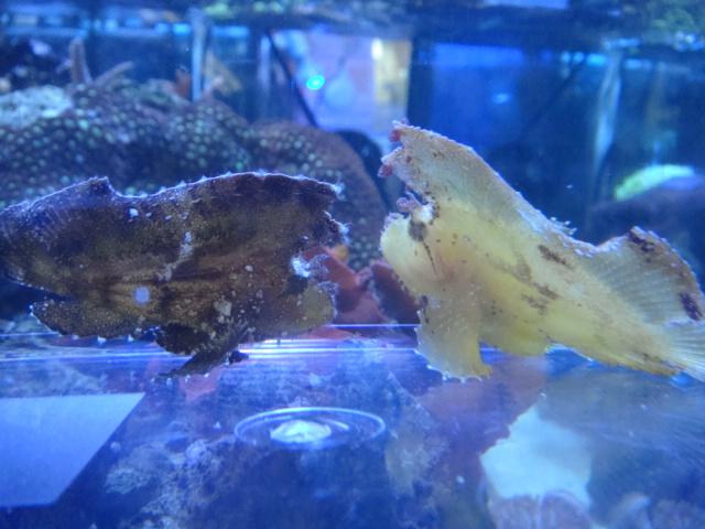 海水魚・サンゴ_f0189122_13232078.jpg