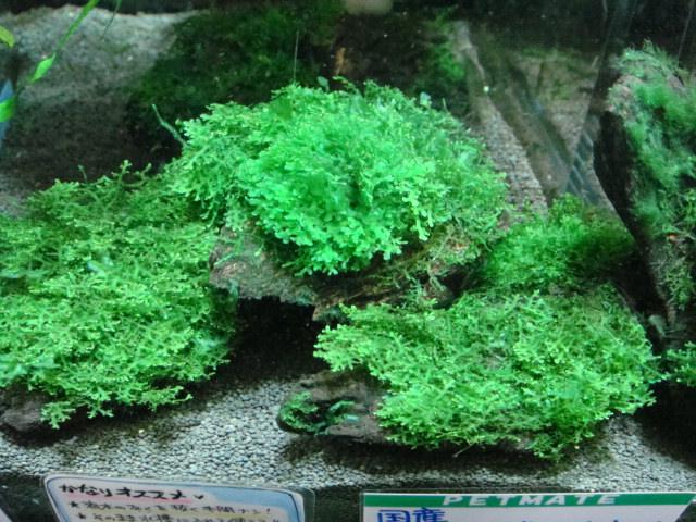 水草・日本産淡水魚_f0189122_13353151.jpg