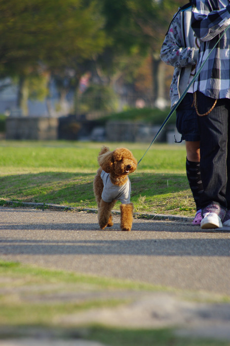 琵琶湖畔をスナップ..._f0152550_21554087.jpg