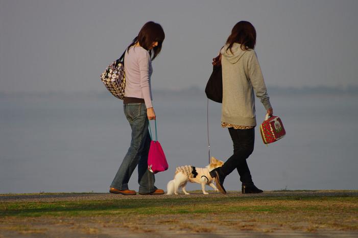 琵琶湖畔をスナップ..._f0152550_21581010.jpg