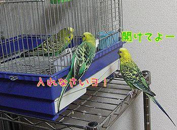 f0196665_0531525.jpg