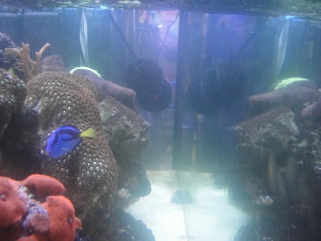 サンゴ用冷凍フード_e0181866_13163569.jpg
