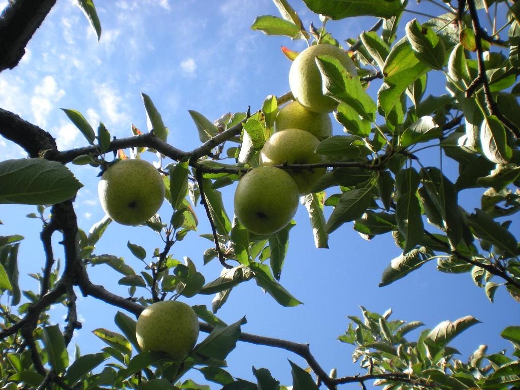 りんご天国!!!_a0125419_22335252.jpg