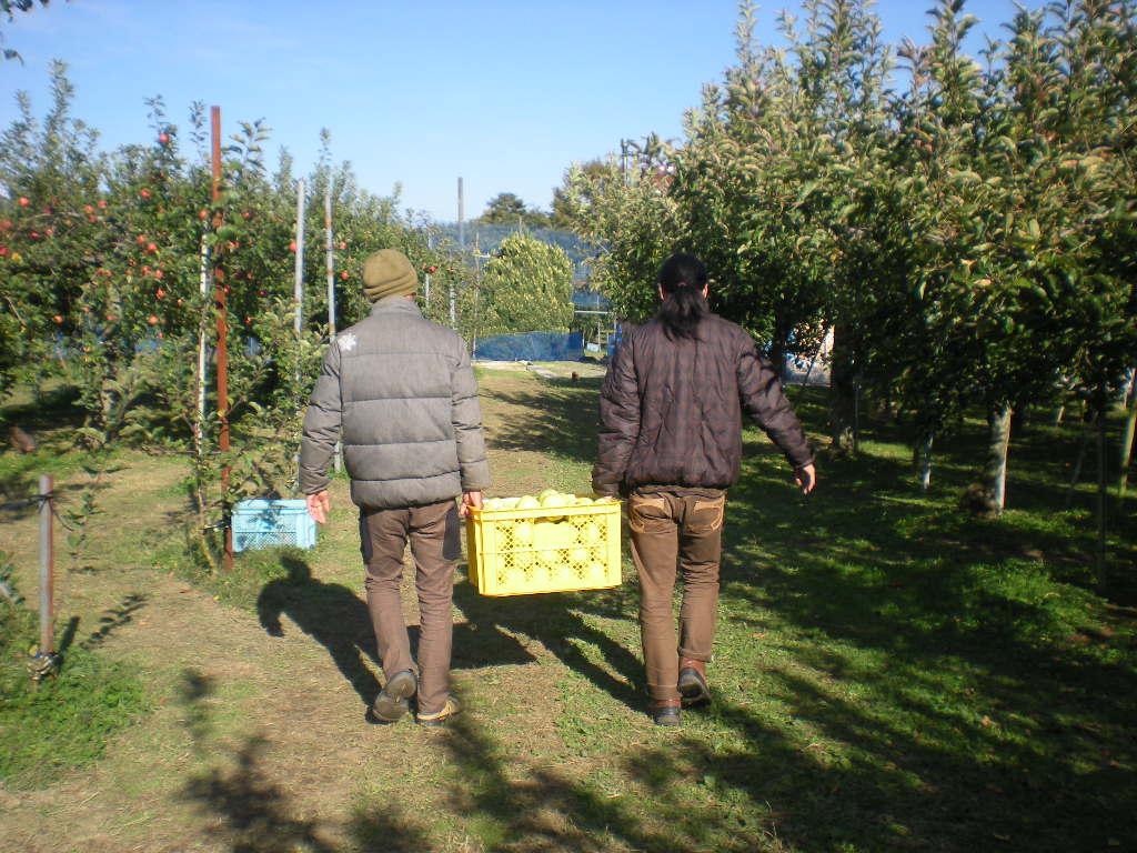 りんご天国!!!_a0125419_22481182.jpg