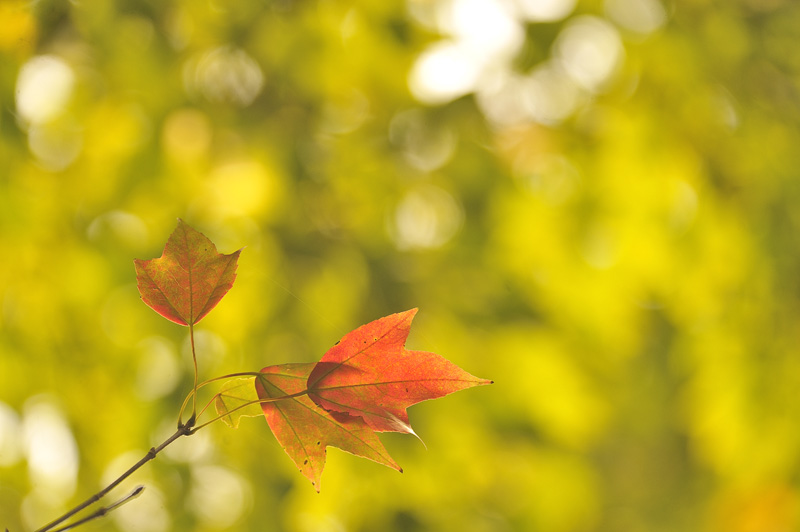 One day in Autumn_a0059621_18175582.jpg