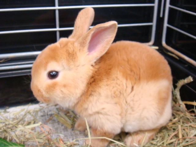 ウサギ・ハムスター_f0189122_15245128.jpg