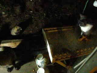 子猫 VS 子ダヌキ 御食事処の冷戦_d0127634_1635483.jpg