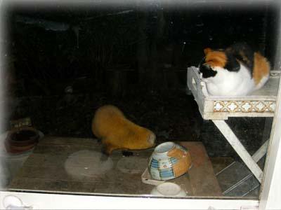 子猫 VS 子ダヌキ 御食事処の冷戦_d0127634_1654758.jpg