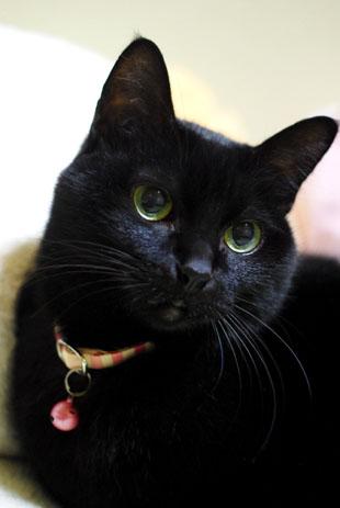 黒猫を撮るのは難しい・・・・_f0166234_223268.jpg