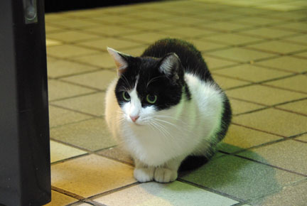 黒猫を撮るのは難しい・・・・_f0166234_2391685.jpg