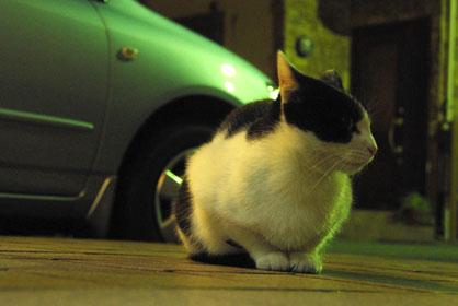 黒猫を撮るのは難しい・・・・_f0166234_247972.jpg