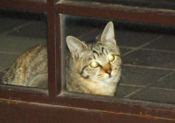 黒猫を撮るのは難しい・・・・_f0166234_2512134.jpg