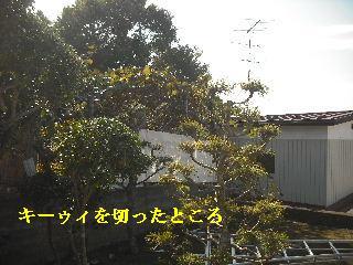 f0031037_1839349.jpg