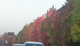 楓(ふう)の木。。。_e0109066_8395280.jpg