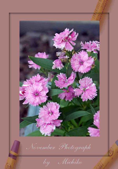 f0120483_200321.jpg
