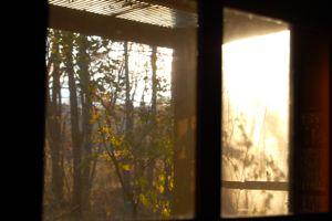 冬の始めの音楽、蜂蜜色の森。_d0028589_17485728.jpg