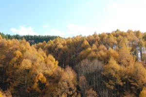 冬の始めの音楽、蜂蜜色の森。_d0028589_17491056.jpg
