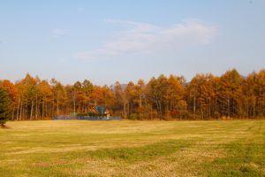 冬の始めの音楽、蜂蜜色の森。_d0028589_1749221.jpg