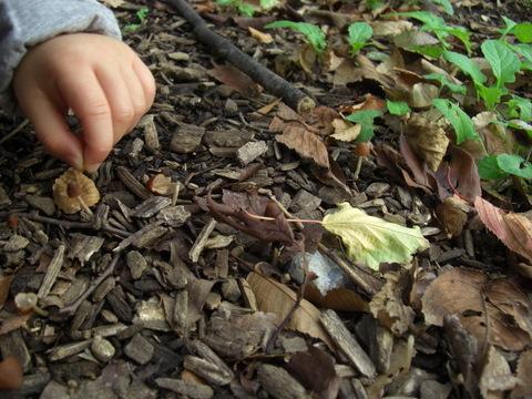 小さい秋見つけた_f0169509_14491978.jpg