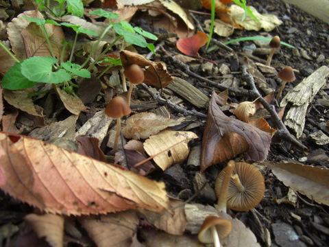 小さい秋見つけた_f0169509_14492591.jpg